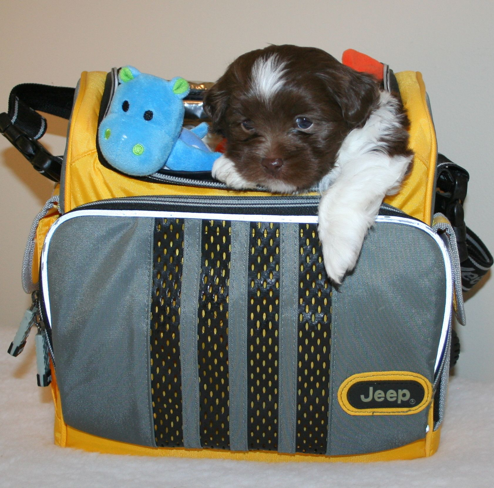 Ollie Wk 5 Diaper Bag Bags Puppies