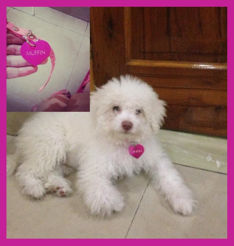 If Its Pink Then I Want It Http Www Headsupfortails Com Dog Personalised Products Dog Name Tags Html Dogs Dogta Online Pet Supplies Buy Pets Pet Supplies