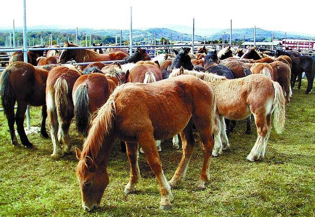 Feria de San Marcos en Soncillo Los caballos hispano-bretones serán ...