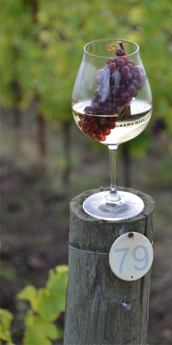 pin by pati s pin house on wines and vines pinterest rh pinterest es