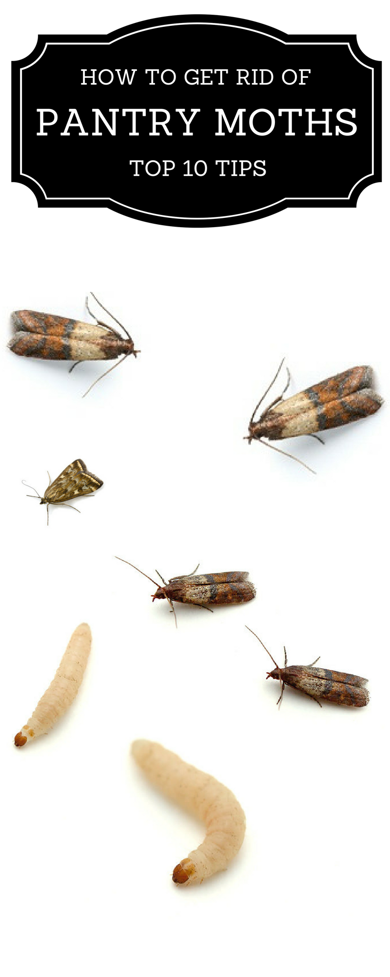 TOP 10 Tips On How To Get Rid Of Pantry Moths | Pantry ...