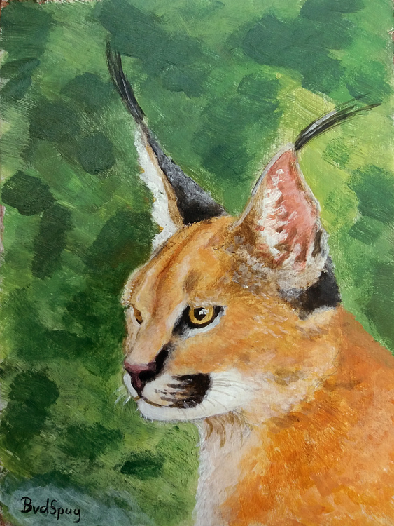 Brian's Notebook Caracal Caracal, Leopards, Artwork