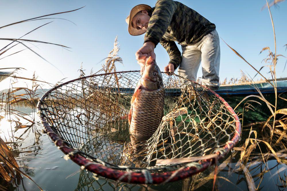 How to catch fish how to catch trout how to catch
