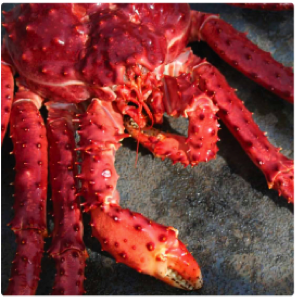 Patagonian King Crab | Foods From Chile