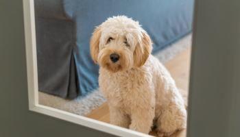 Welpen Alleine Lassen Einfaches Training Mit Furbo Stories Of A Blonde Welpen Hunde Welpen Erziehung Hundewelpen