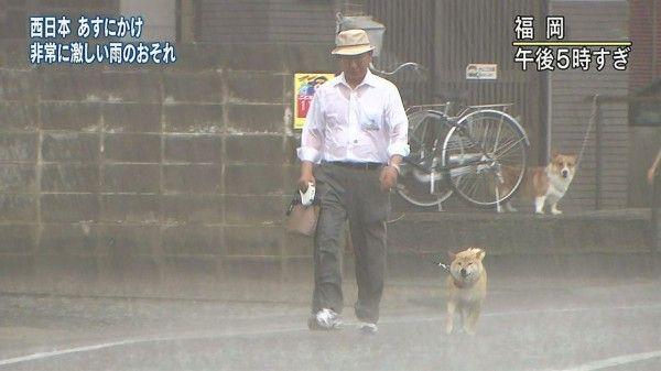 イッヌ「台風近付いてるけど散歩行くやで~」