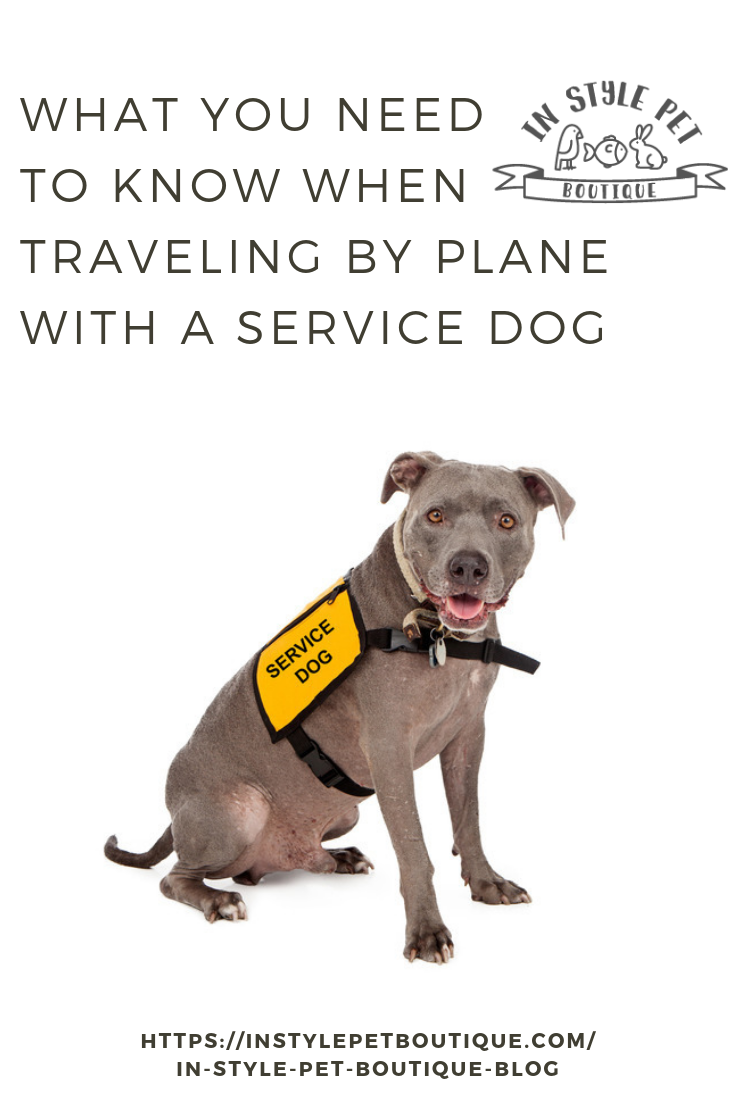 What You Need To Know When Traveling By Plane With A Service Dog Service Dogs Dogs Dog Travel