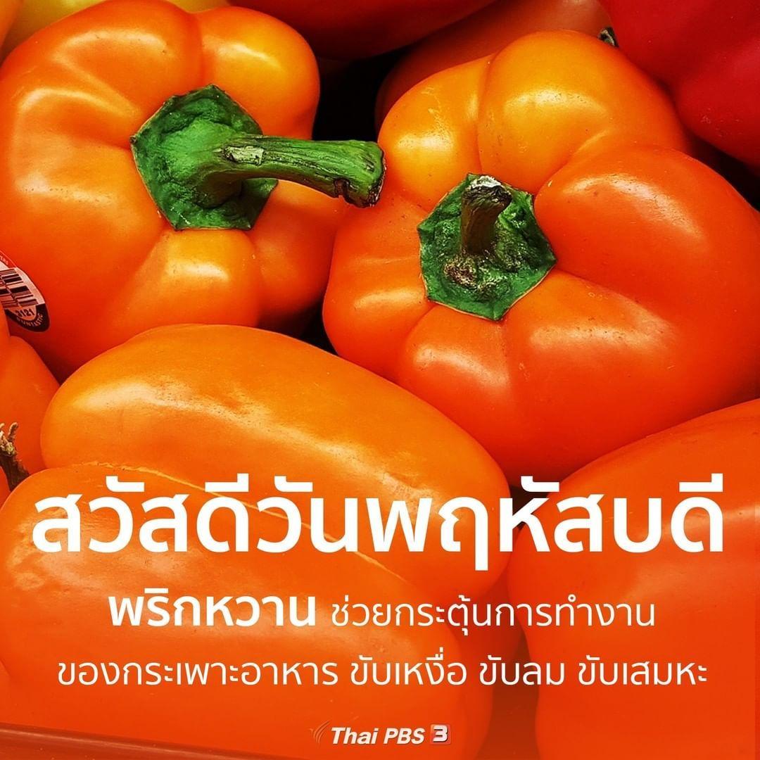 Thai Pbs ไทยพ บ เอส On Instagram สว สด ว นพฤห สบด พร กหวาน ช วยกระต นทางการทำงานของกระเพาะอาหารทำให ระบบการย อยอาหารด ข สว สด ว นพฤห สบด สว สด ตอนเช า