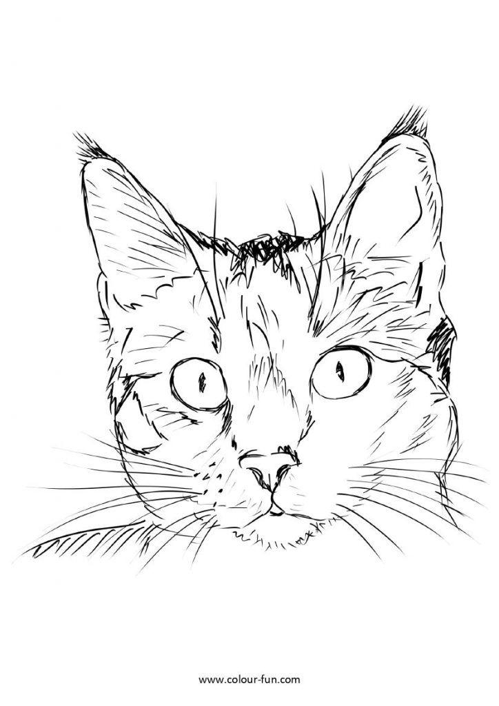pin cat sketch