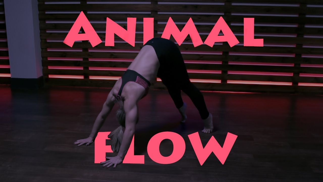 The Beauty Of Animal Flow (Full)... (With images) Animal