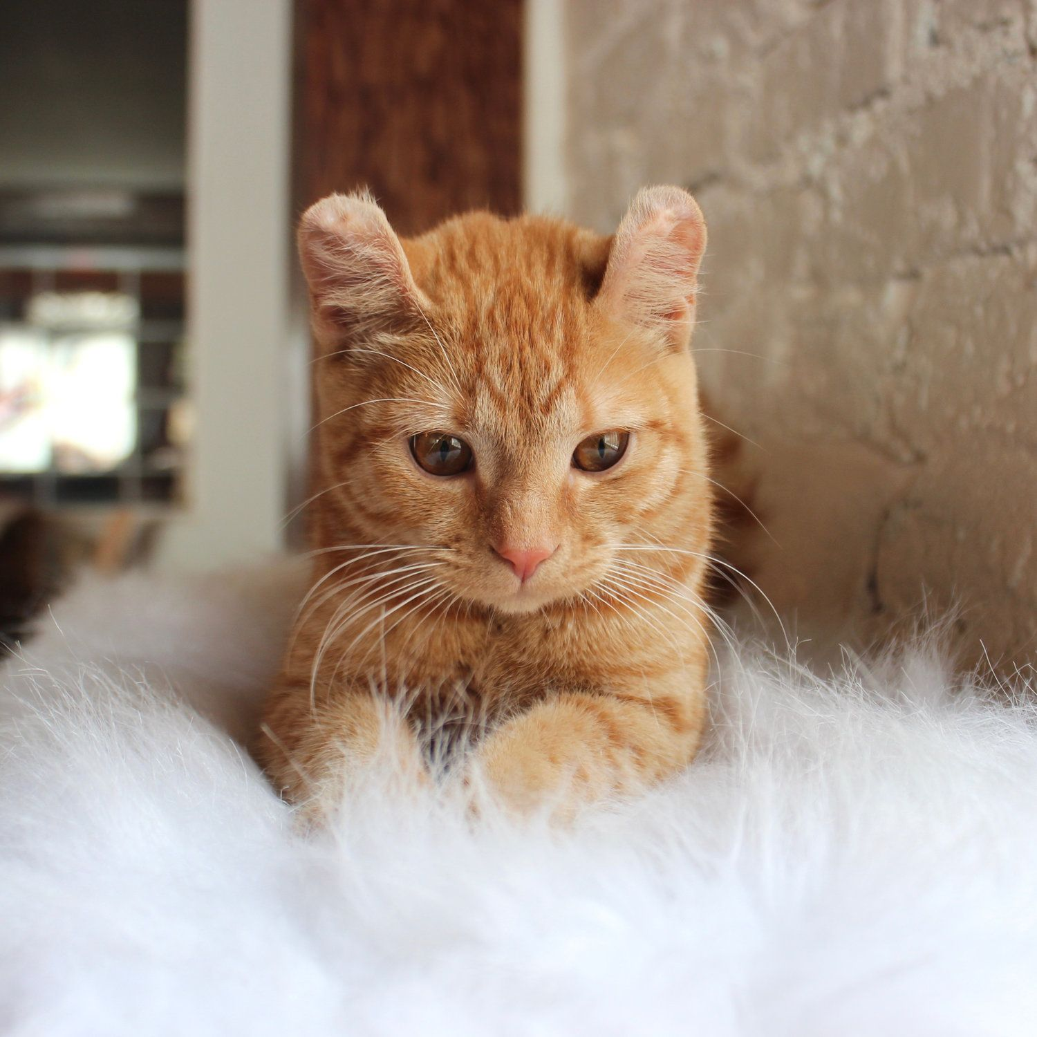 Pin by Dale Baker on Kittens and Cats | Pinterest | Cat cafe and Cat