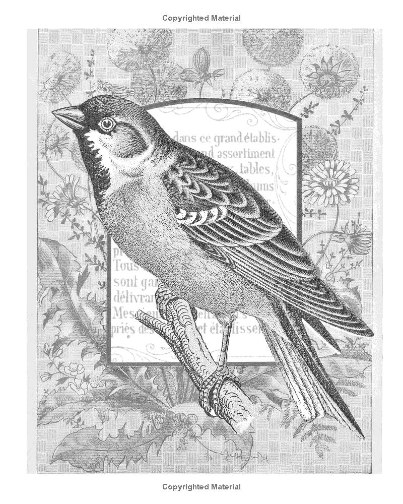 Beautiful Birds: Grayscale Vintage Adult Coloring Book: Amazon.de: Heather  Land: Fremdsprachige Bücher