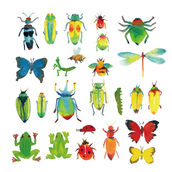 Μουνί bug