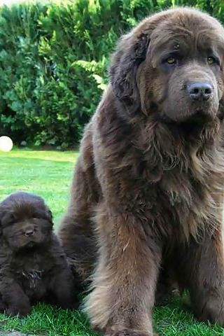 Pin by Liz Bailey on About Layla | Cute animals, Gentle