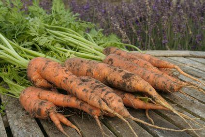 Plants That Carrots Love Companion Plants For Carrots 400 x 300