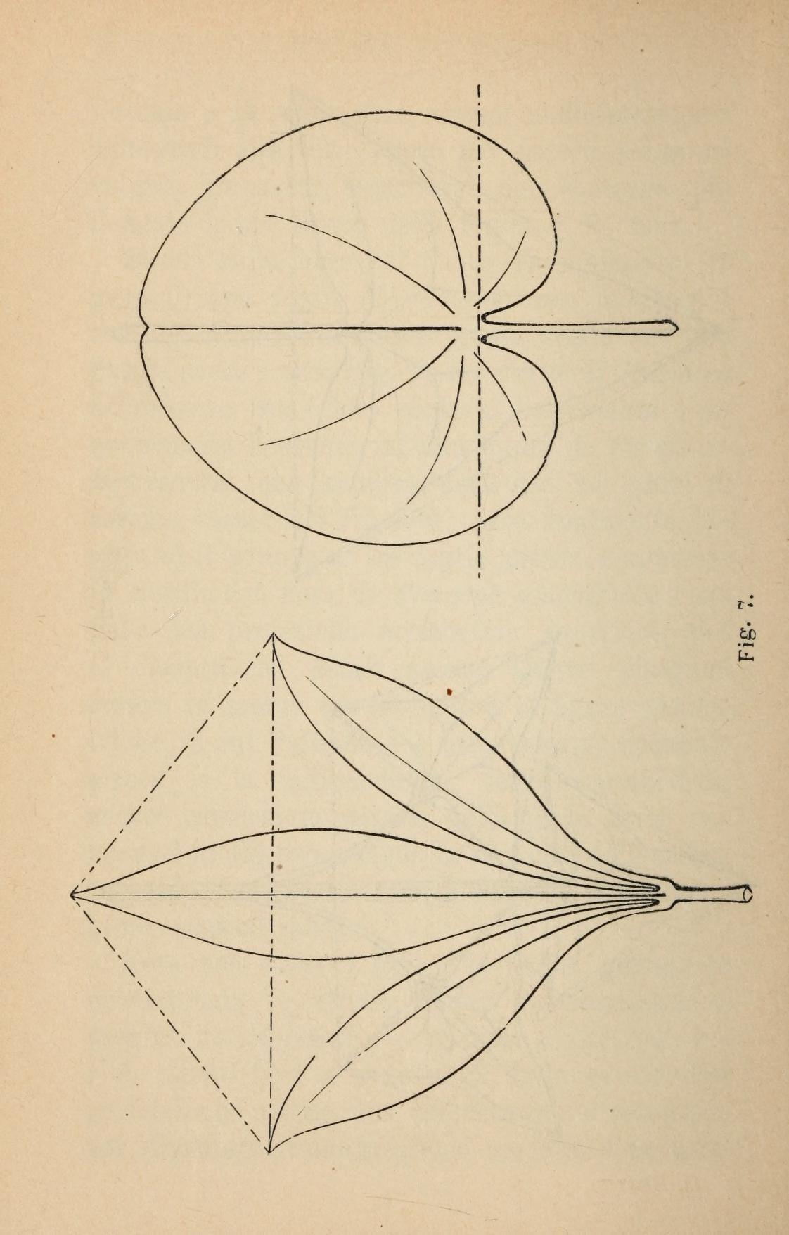 I principii del disegno e gli stili dell'orname...