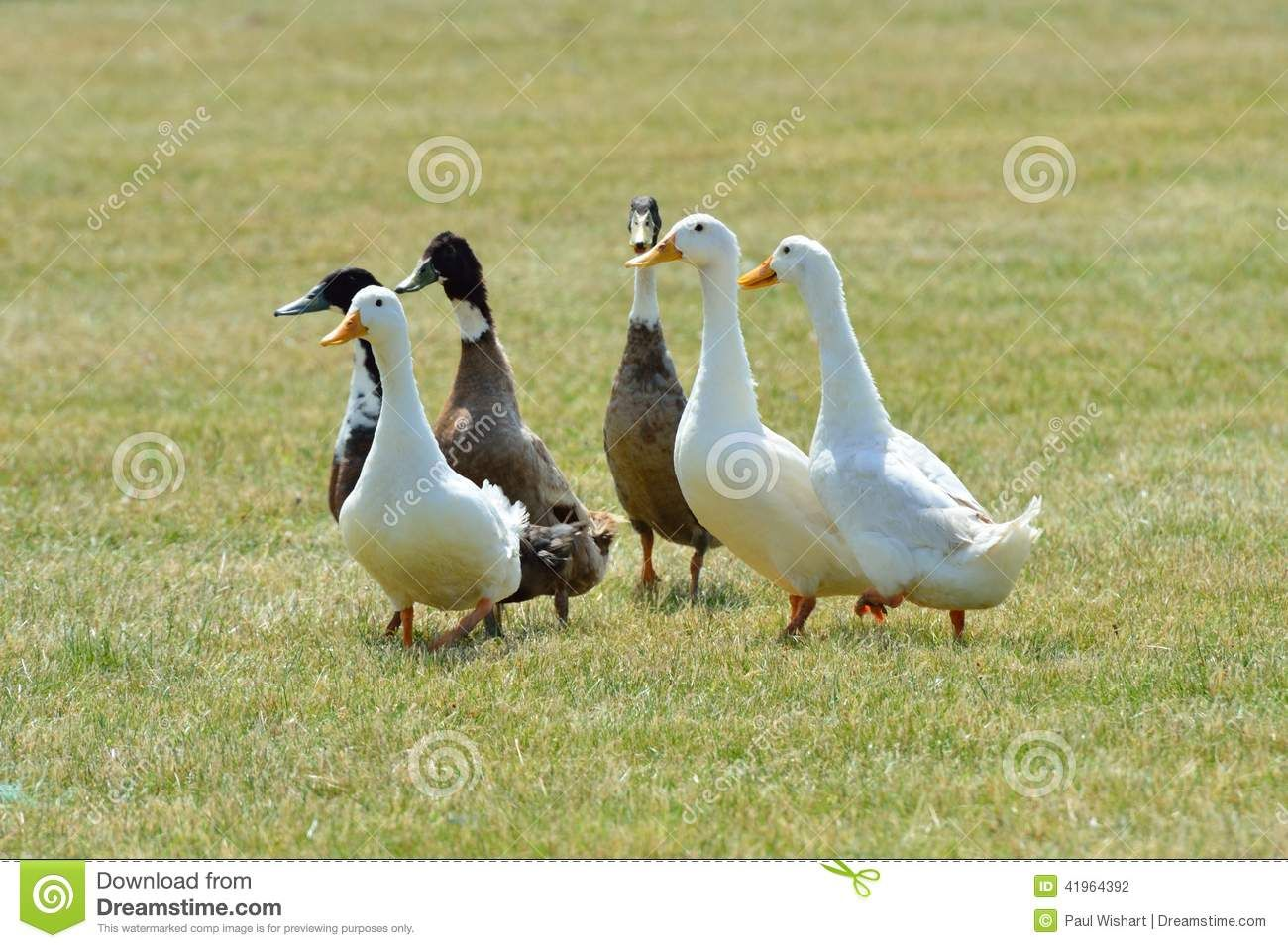 Image Result For Images Group Of Ducks Animals Images Cute Animals Animals