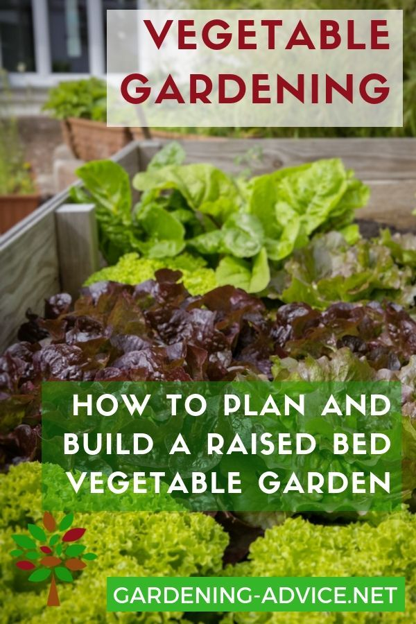 The Raised Bed Vegetable Garden #howtogrowvegetables