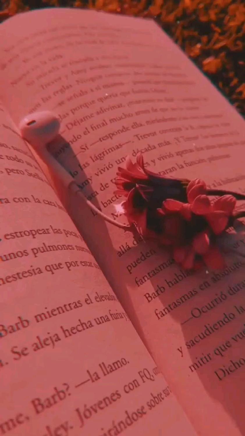 Ich wnschte, ich knnte dir ab und zu eine rosa Rose geben. und jedes Mal, we... -  ab  dir  eine  Geben  ich  jedes  knnte  Mal  rosa  rose  und  wnschte  zu  indoorplants