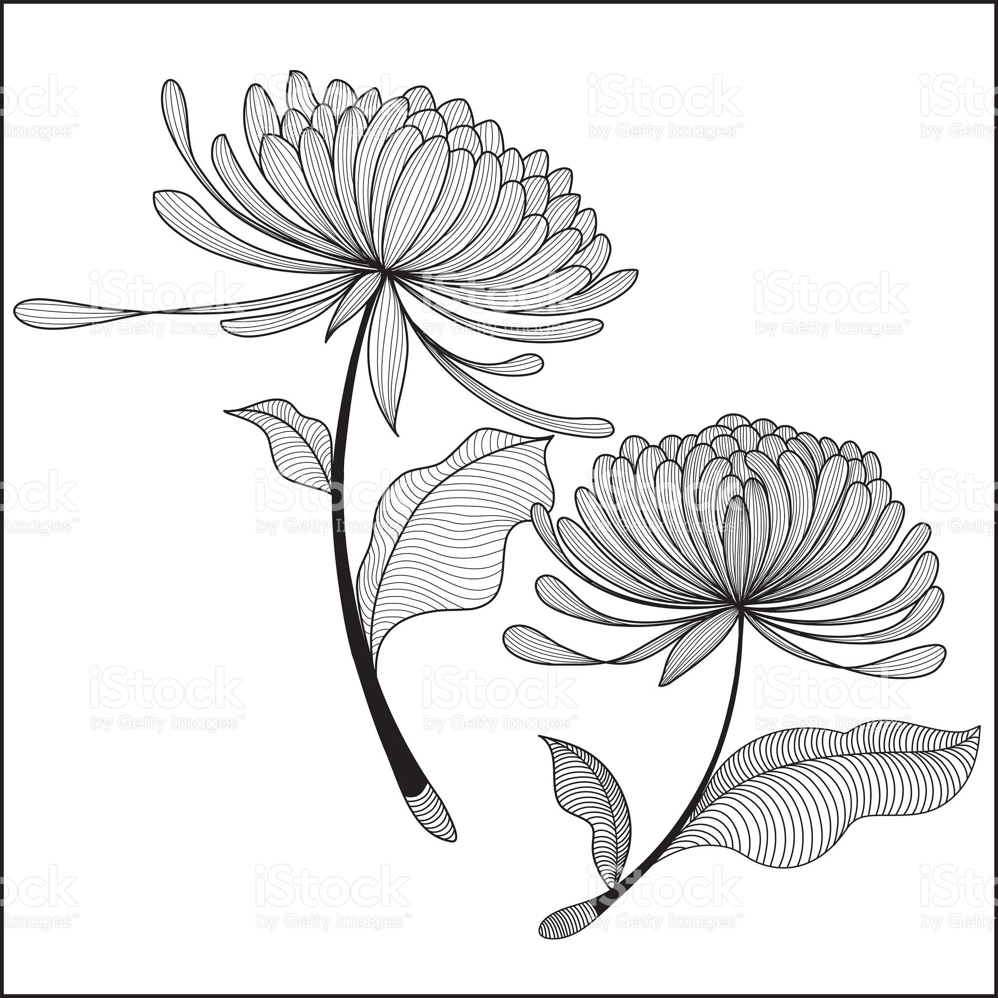 Great bunch of Chrysanthemum. Perfect for the flowers lover. EPS and ...
