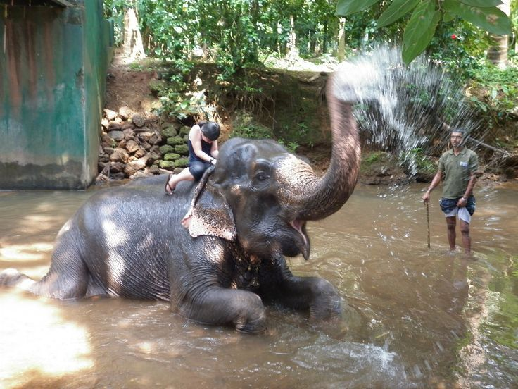 Un éléphant heureux