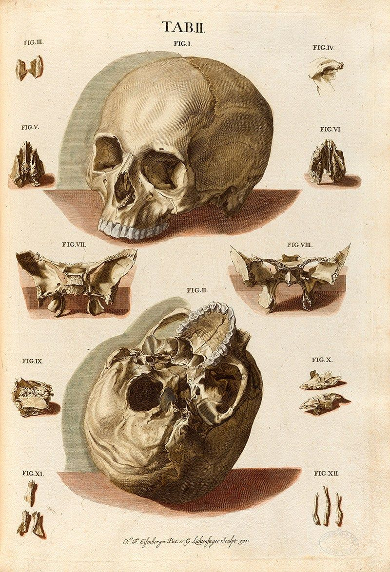 Vintage Antique Anatomy Dissection Flip by