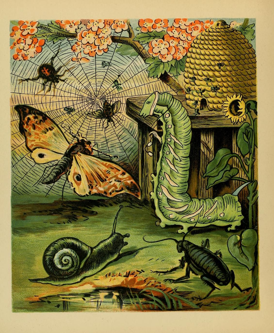 Comic Insects . Reid Illustrated Berry