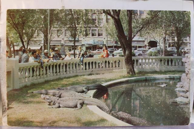 The Alligators In El Paso Downtown Plaza San Jacinto Plaza Or