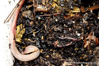 make a compost bin for the class to see the worms do their job making rich soil