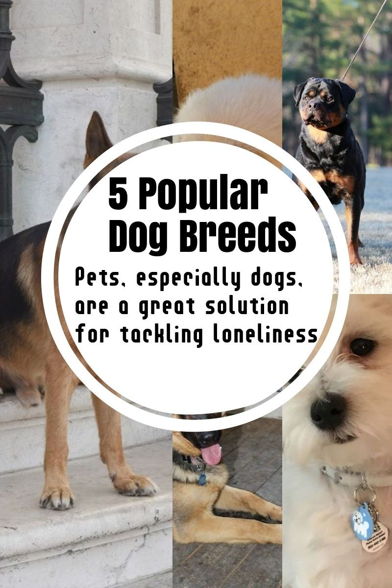 Small Dog Breeds That Dont Shed English Bulldogs