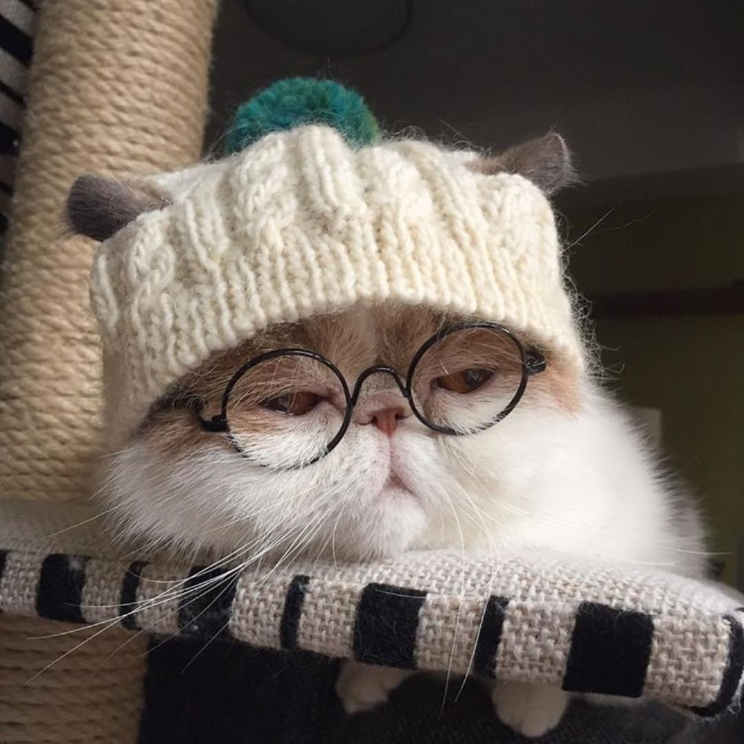33 Likes 1 Comments Cats Are Angel Cats Are Angel On Instagram It S So Cold Yeah Only It S So Cold For Cute Baby Cats Cute Cat Memes Kittens Cutest
