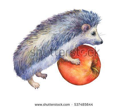 Prickly hedgehog holds red apple in paws. Hand painted watercolor illustration isolated on white background.