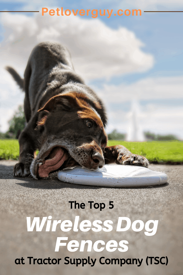 The Top 5 Wireless Dog Fences At Tractor Supply Company Tsc Dog Fence Wireless Dog Fence Dogs