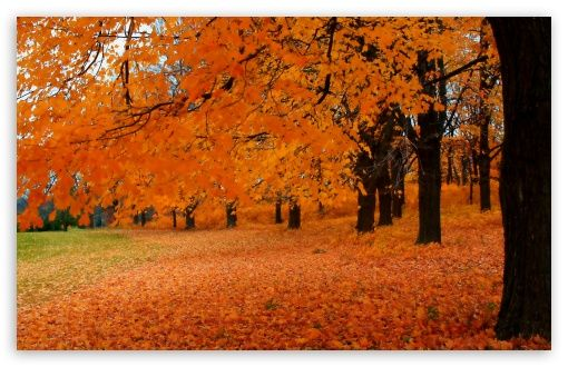 Download Autumn In Wisconsin Hd Wallpaper Forest Landscape Autumn Trees Autumn Forest