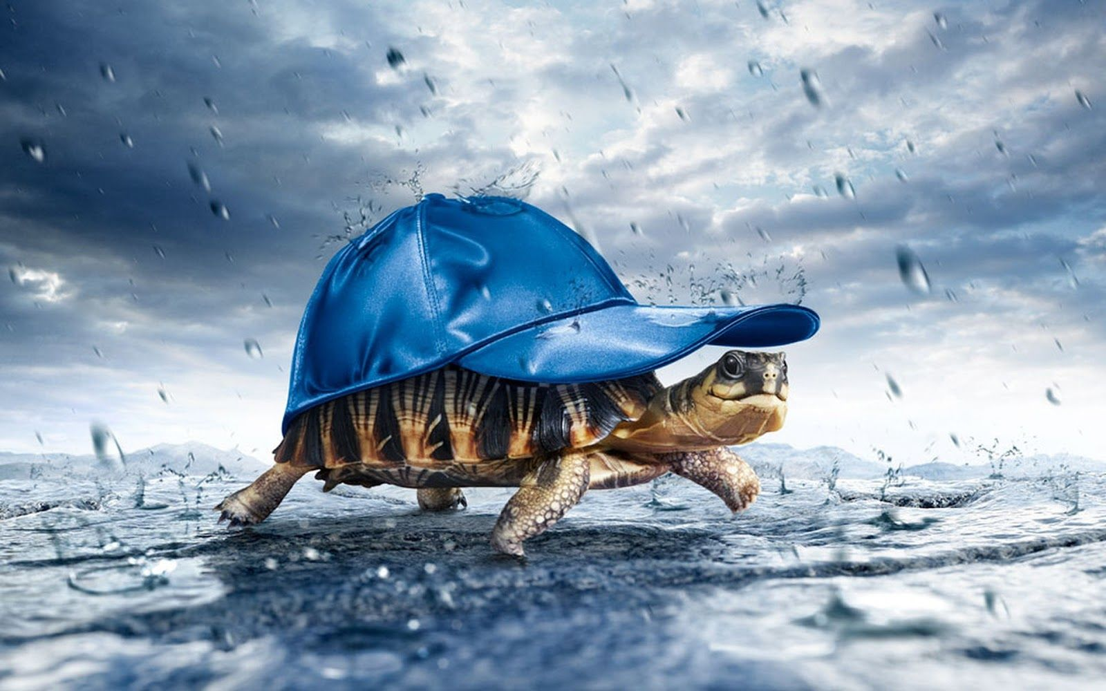 Enjoyable Rainy Day Sms Shayaries Barish Funny Quotes Messages Turtles Funny Turtle Wallpaper Happy Turtle