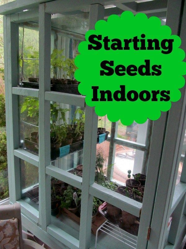 Starting seeds indoors gardens homesteads and vegetable garden start your garden off right by starting your seeds indoors its easier than workwithnaturefo