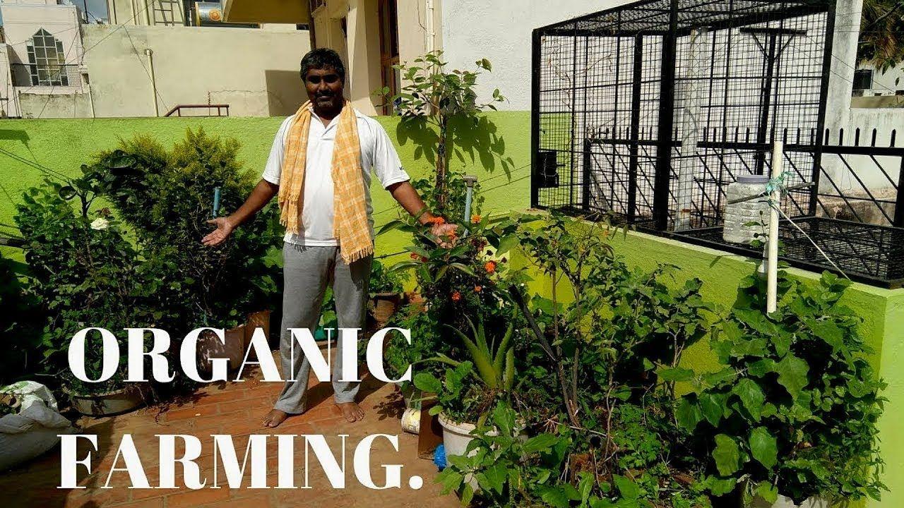 My organic terrace garden. Organic farming, Terrace