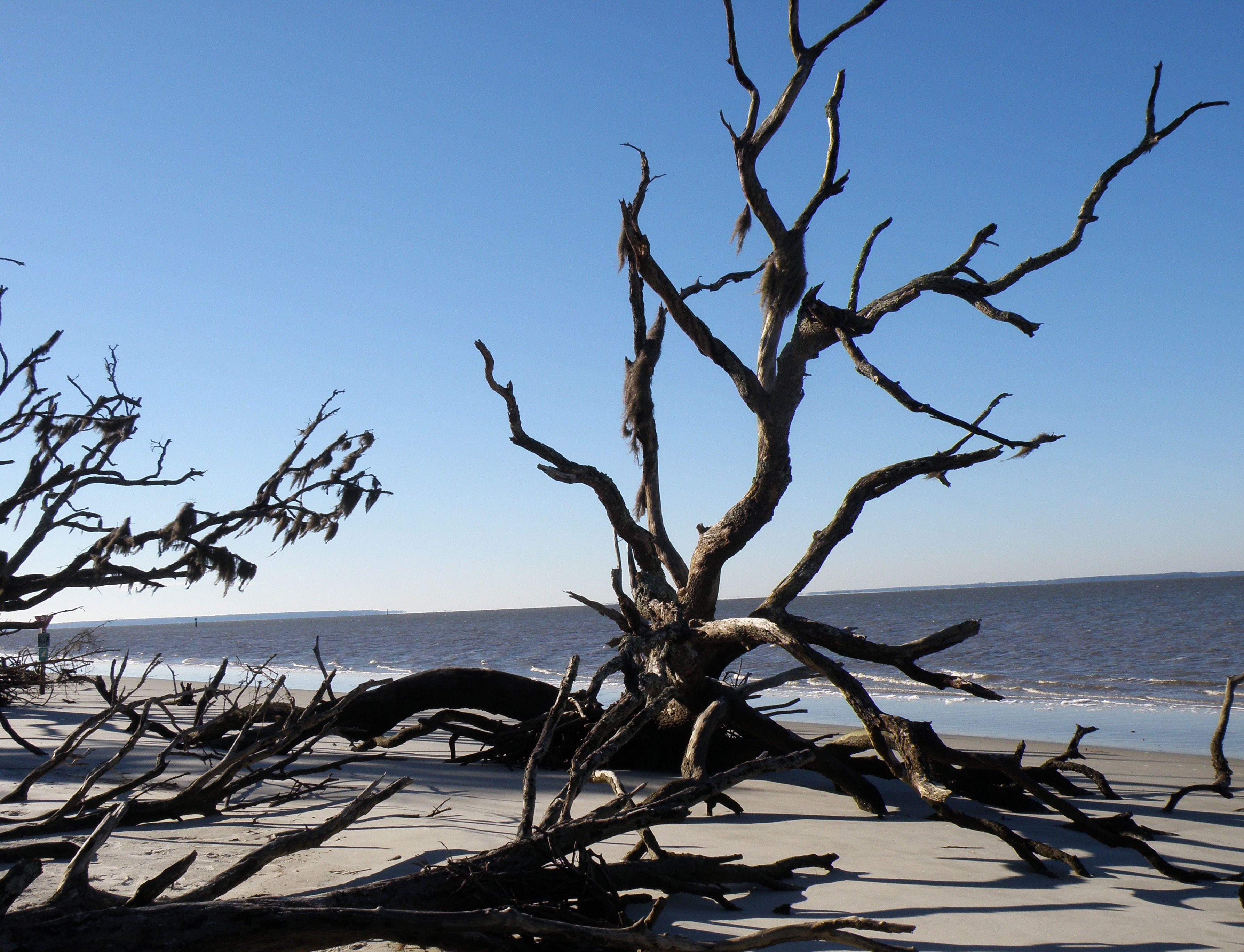 St Andrews Driftwood Beach Jekyll Island Ga