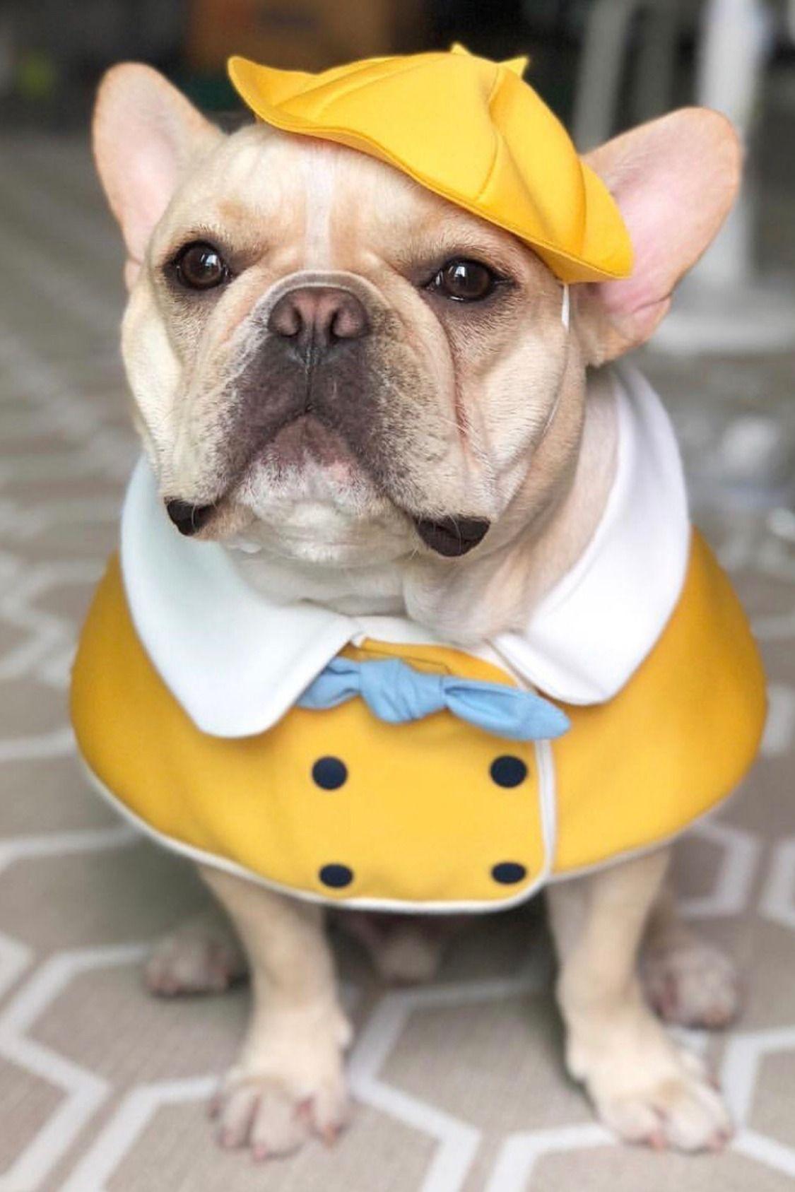 Halloween Decorative Dog Costume for Medium Dogs Frenchies