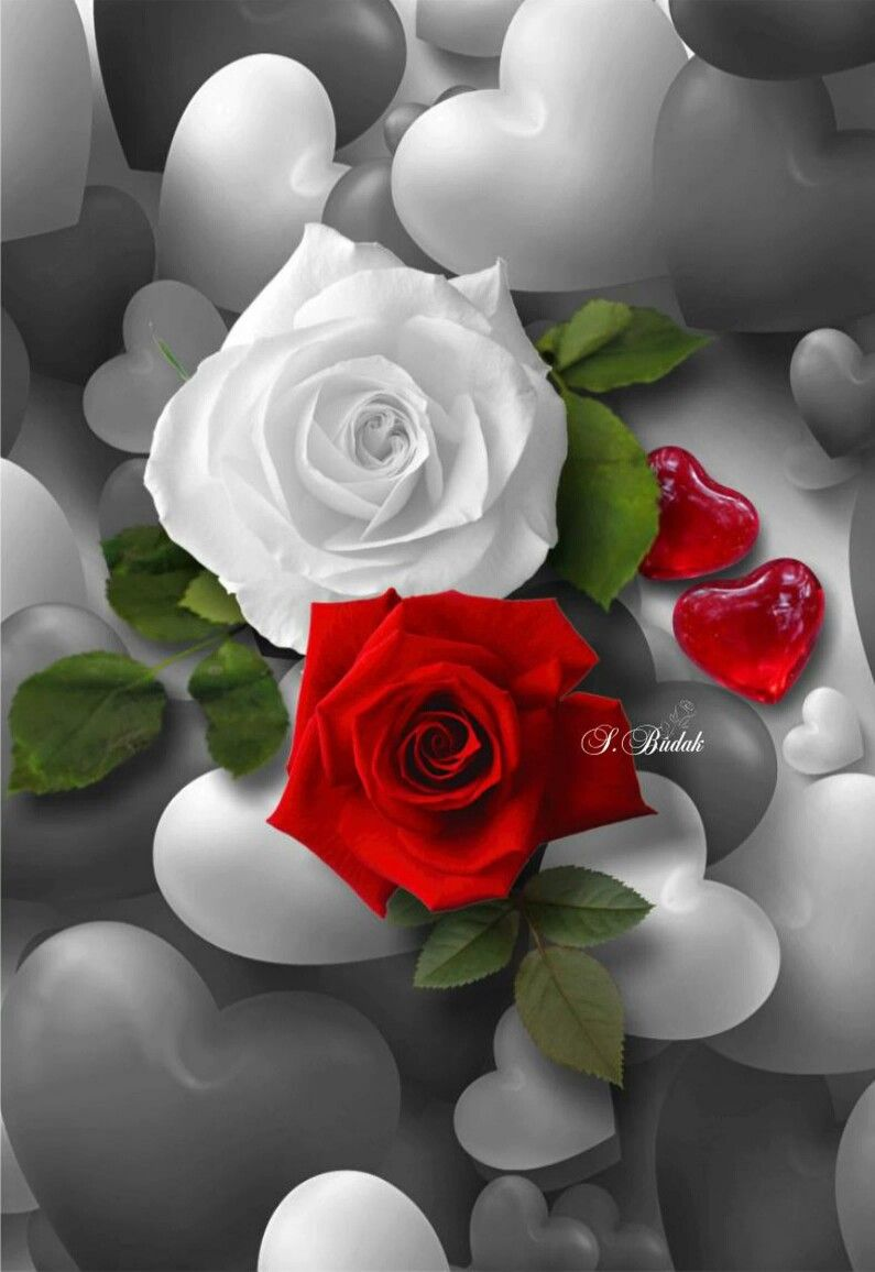 Pin by Tina Tina on good morning | Pinterest | Colour splash and Flowers
