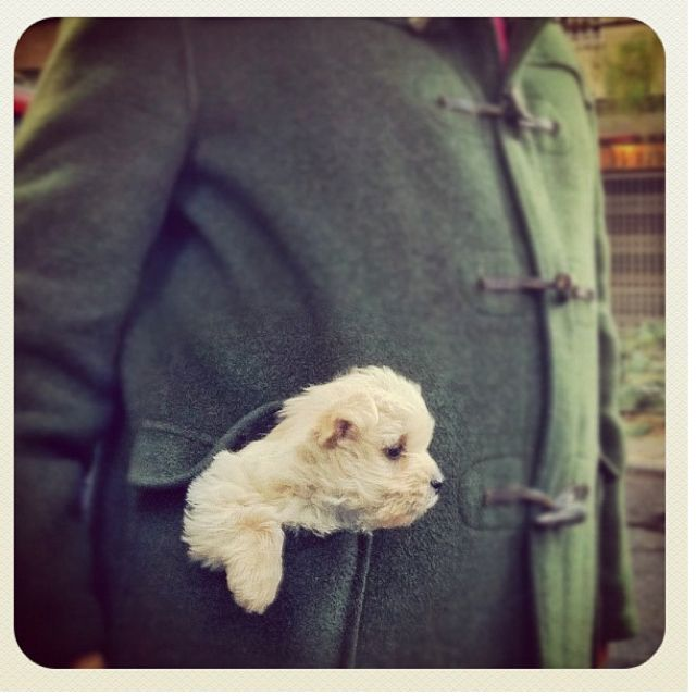 Hitchin A Ride Baby Dogs Bichon Frise Cute Animals