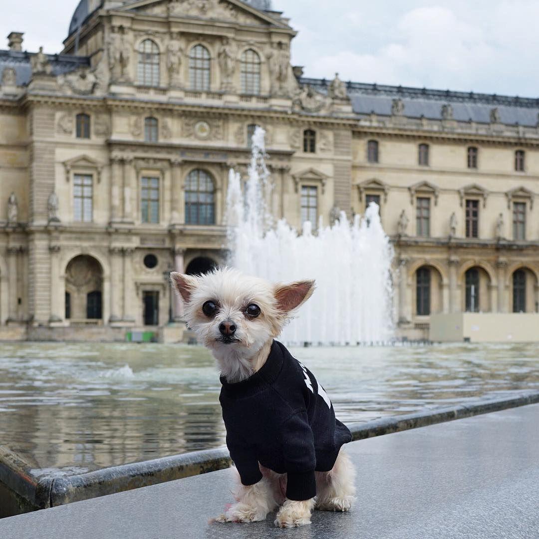 Ellabeanthedogso Louvre Ly Jetsetbean Louvre Dog Love Instagram