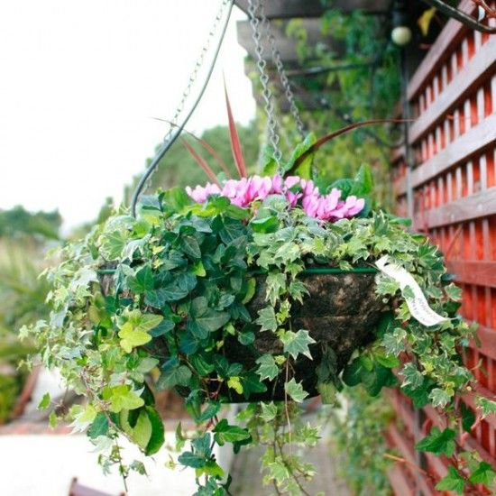 Winter Hanging Flower Basket Hanging Garden Hanging Plants