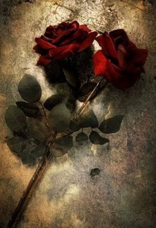 Red roses ✿⊱╮ by VoyageVisuel
