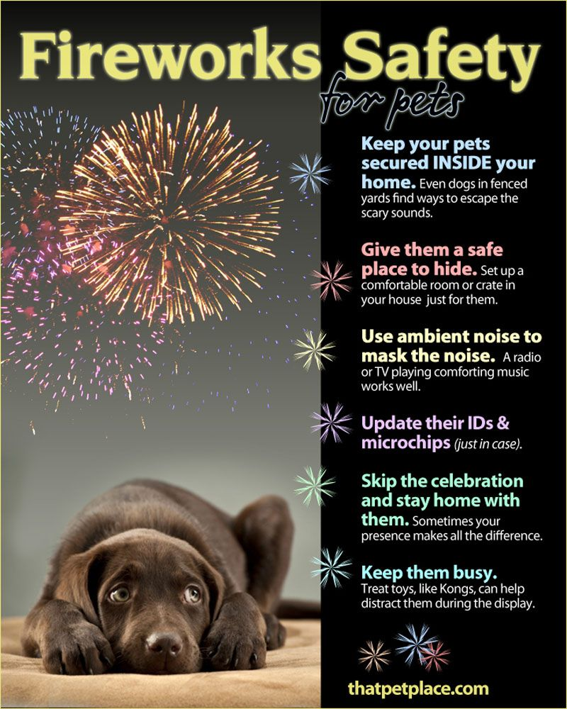 Pets Fireworks Safety Tips Firework safety, Dogs