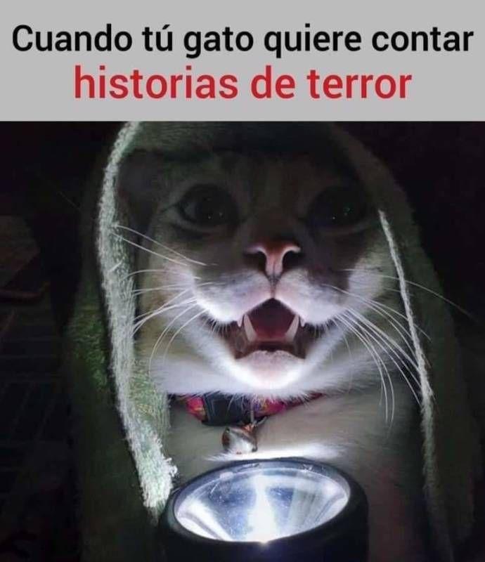 Memesespanol Chistes Humor Memes Risas Videos Argentina Memesespana Colombia Rock Memes Love Viral Funny Cat Memes Funny Animal Memes Animal Memes