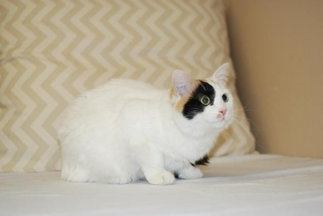 Adopt Lilly On With Images Cats Lillies 1 Year Olds