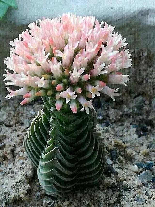 Succulents Fiori Meraviglia Della Natura Giardino Di Piante