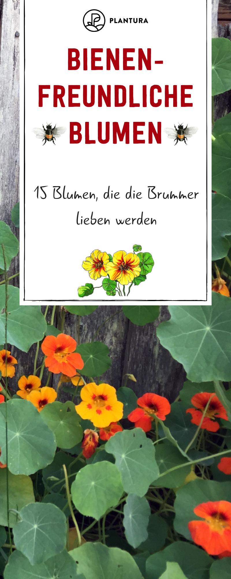 Bienenfreundliche Blumen: 15 Blumen, die die Brummer lieben werden - Plantura