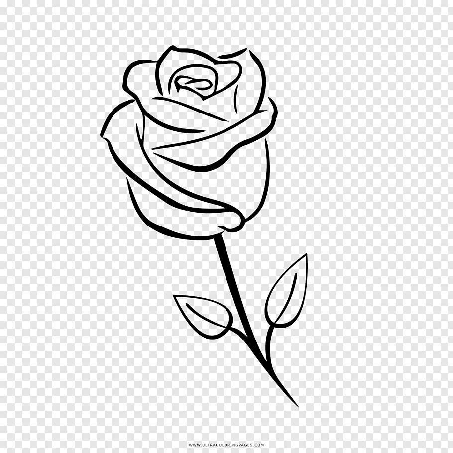 Garden Roses Drawing Coloring Book Rose Png Pngwave Book Coloring Drawing Garden Png Pngwave Rose R Roses Drawing Rose Drawing Simple Rose Flower Png